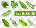 Palm Tree Branches Set Royalty Free Stock Photo