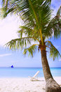 Palm tree and chair on beach Stock Photography