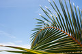 Palm Tree close up Royalty Free Stock Photos