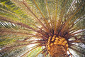 Palm tree close up view with copy space Royalty Free Stock Photography