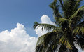 Palm tree and cloudscape scenic view of leafy green with blue sky background Royalty Free Stock Photos