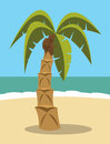 Palm tree with coconuts on a beach Royalty Free Stock Photos