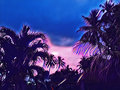 Palm tree crown on sunset sky background. Blue sunset skyscape. Royalty Free Stock Photo