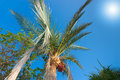 Palm tree with data fruits against a beautiful blue sky with bri Royalty Free Stock Photo