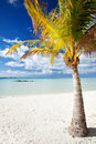 Palm tree on a deserted tropical beach Stock Image