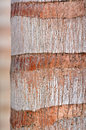 Palm tree detail of a coconut bark texture rough brown wood bark natural texture background horizontal vertical Stock Photography