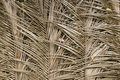 Palm tree dried leafs texture Stock Photos