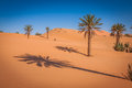 Palm tree in Erg Chebbi, at the western edge of the Sahara Deser Royalty Free Stock Photo