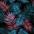 Palm tree foliage