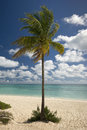 Palm tree on freeport beach grand bahama island bahamas Stock Image
