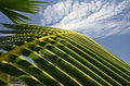 Palm tree fronds Stock Image