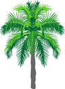 Palm tree green symmetrical illustration Stock Photography