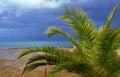 Palm tree growing on the sea shore island of corfu Stock Photos