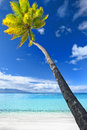 Palm tree hanging over stunning blue lagoon Stock Photos