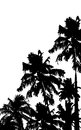 Palm tree illustration of in grungy background Royalty Free Stock Photography