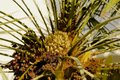 Palm tree inside the Royalty Free Stock Images