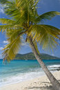 Palm Tree Islands Sailing Royalty Free Stock Photography