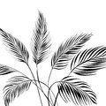 Palm tree isolated over white vector illustration Royalty Free Stock Photography