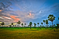 Palm tree landscape in the rice farm in phetchaburi province thailand Royalty Free Stock Images