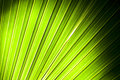 Palm tree leaf abstract background Royalty Free Stock Image