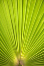 Palm tree leaf background Stock Photo