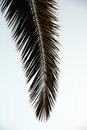 Palm tree leaf isolated view of the of a Royalty Free Stock Photo