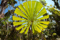 Palm tree leaf tropical rainforest Australia Royalty Free Stock Photo