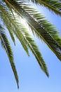 Palm Tree Leafs Stock Photography