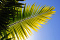Palm Tree Leaver Royalty Free Stock Photography