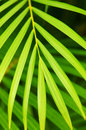 Palm tree leaves Royalty Free Stock Photos
