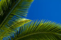 Palm tree leaves against a blue sky top of in hawaii Royalty Free Stock Photography