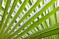 Palm tree leaves background of crisscross in bright light Stock Photo