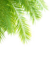 Palm tree leaves border closeup on beautiful fresh green isolated on white background exotic foliage tropical vacation summer Stock Images