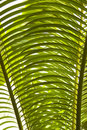 Palm tree leaves detail Stock Photo