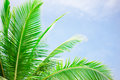 Palm tree leaves over peaceful tropical beach background, blue sea landscape card Royalty Free Stock Photo