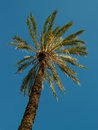 Palm tree lonely illuminated with strong african sun Royalty Free Stock Photo
