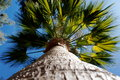 Palm tree looking up a Royalty Free Stock Image