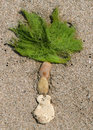 Palm tree made from stone and seaweed on the sand beach Stock Images