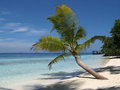 Palm tree in the maldives lone on a deserted tropical beach Stock Image