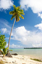 Palm tree, Maupiti, French Polynesia Stock Photo