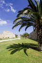 Palm tree in a moat in Rhodes Town, Greece Stock Photos