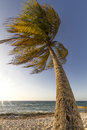 Palm tree moving in the wind Stock Photos
