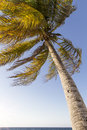 Palm tree moving in the wind Stock Images