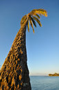 Palm tree next to the ocean into sky Royalty Free Stock Photo