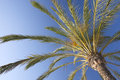 Palm tree nice against the blue sunny sky Royalty Free Stock Image