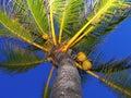 Palm tree at night Royalty Free Stock Photo