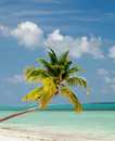 Palm Tree on Ocean Beach Royalty Free Stock Image