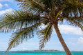 Palm tree with ocean and blue sky Royalty Free Stock Photo