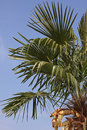 Palm tree over blue sky leaves of Stock Images