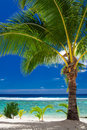 A palm tree overlooking tropical beach on roratonga cook island single islands Royalty Free Stock Photography